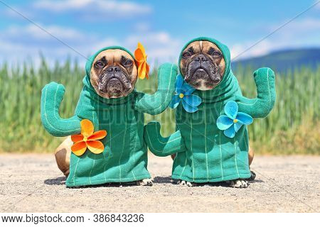 Funny French Bulldog Dogs Dressed Up With Funny Cactus Plant Halloween Dog Costumes With Fake Arms A