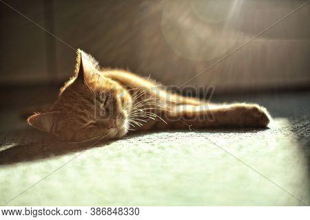 Small Beige Cat Sleeping On Greenish Carpet With Sun Beams Above