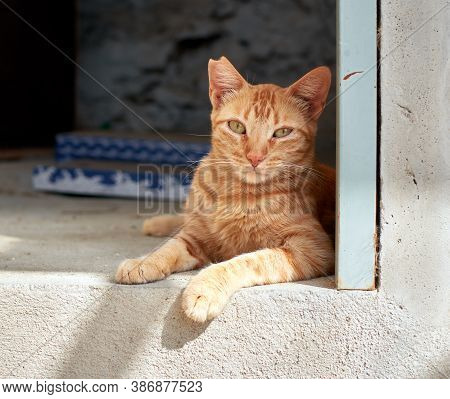 A Closeup Shot Of An Orange Domestic Cat Laying Down On The Floor