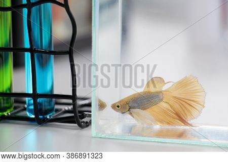 Fish Research Quality Control In Laboratory For Study Disease And Internal Organs. Biotechnology Sci
