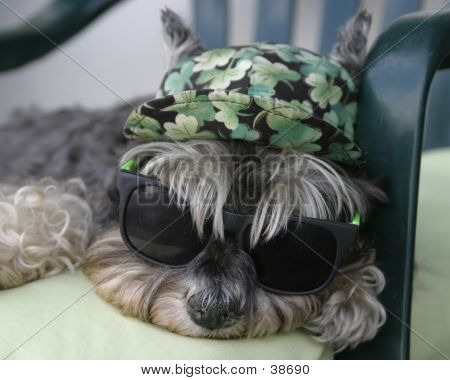 Cute dog wearing sunglasses and hat catching a snooze in a chair. poster
