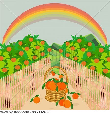 Orange Garden Green Landscape Wood Fence Path Rainbow Basked With Fruit Blue Sky Flat Design Art Des