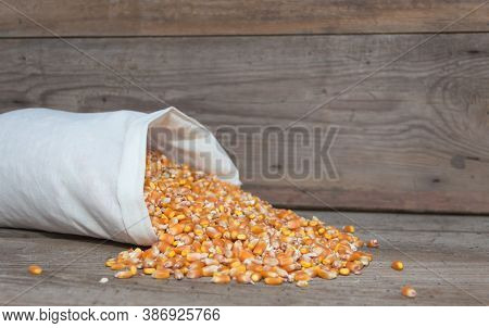 Whole Corn Grains For Animal Feed For Sale In The Forage