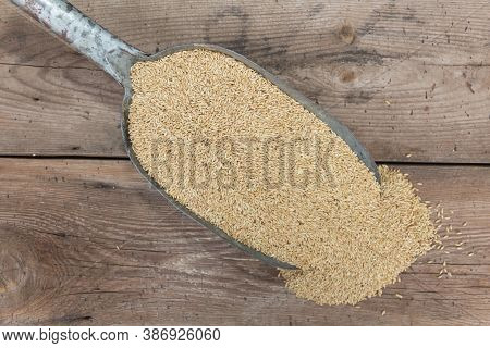 A Spoon With Birdseed For Sale In The Forage