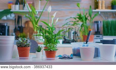 Presenting Plants For House Gardening On Kitchen Table At Home. Fertil Soil With A Shovel Into Pot,