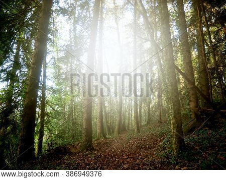 Enchanted Forest Crossed By The Suns Rays