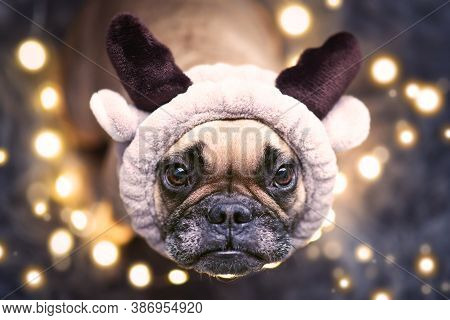 Adorable Cute Small Festive French Bulldog Dog Dressed Up As Reindeer With Plush Antler Headband Loo