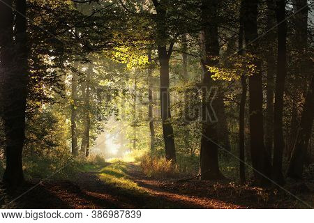 Forest Road path autumn trees sunrise Nature background alley way morning Nature background sunset Nature background mist fog Nature background Nature background trail Nature background light sunlight Nature background landscape park Nature background.