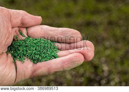 Senior Male Caucasian Hand Holding Green Coated Grass Seeds For Repairing Lawn With New Drought Resi