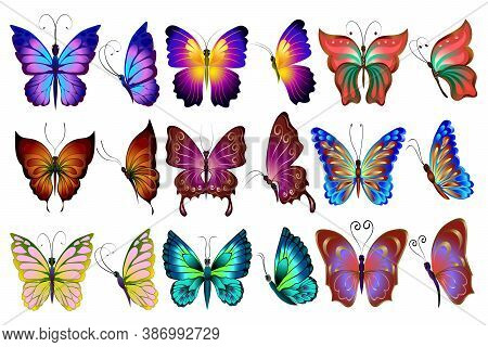 Big Vector Set Of Colored Butterflies.vector Set Of Colored Butterflies On A White Background.