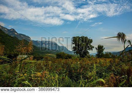 Thicket With Tree And Blue Sky Around Lake Caldaro In Bolzano Italy