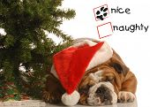 naughty or nice english bulldog wearing santa hat under christmas tree poster