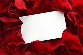 Blank white gift card on a bed of red rose petals ready for your message. poster