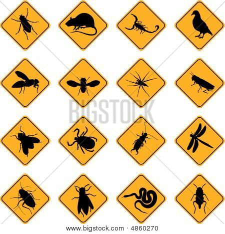 Rodent And Pest Signs.