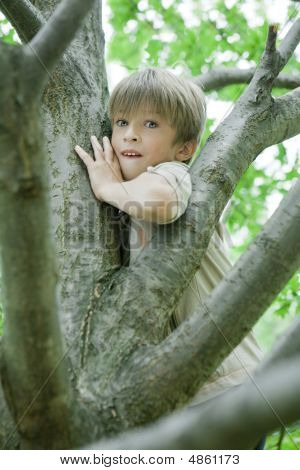 Cute Boy Hanging From Branch Of Tree.