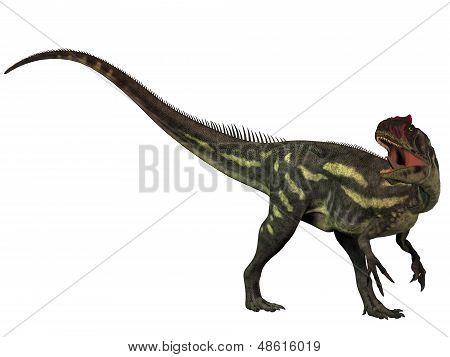 Allosaurus Isolated