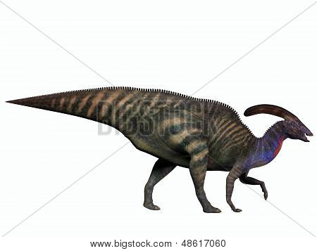 Parasaurolophus On White