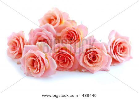 Roze rozen op wit