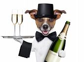 dog toasting new years eve with champagne and service tray poster