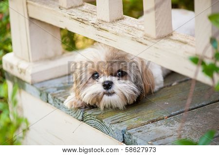 puppy dog peeking on porch