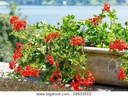 Red Blossoming Flower Plant