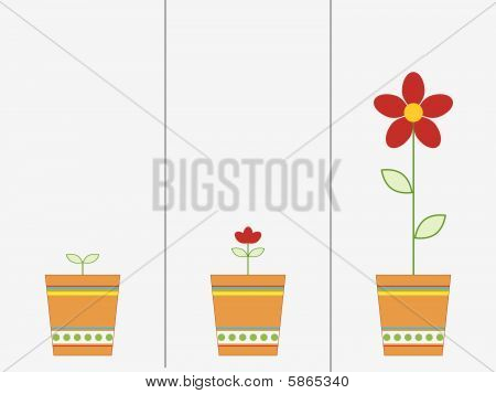 Flower  Growing
