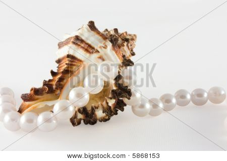 Shell and rope of pearls on white romantic, luxury, glamour poster