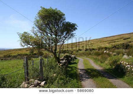Rural Iirish farm track