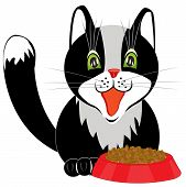 Black cat and tureen with meal on white background poster