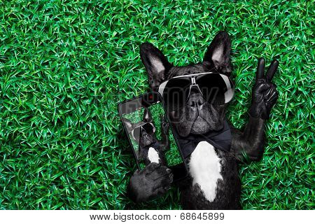 dog taking a selfie on a meadow with peace and victory fingers poster