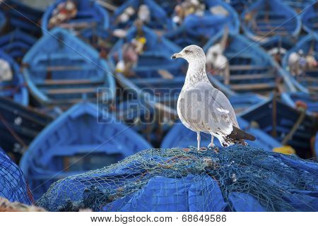 Blue fishing boats and seagull in Essaouira port, Atlantic coast, Morocco, Africa poster