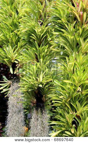 Bright green epiphytes on tree trunks