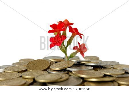 Coins and flower, isolated on white background