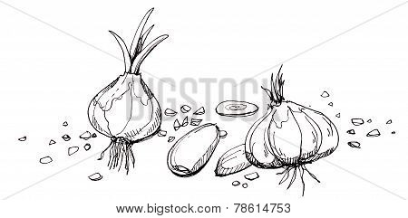 Garlic illustration drawingHand drawn of garlic in different shape and stead