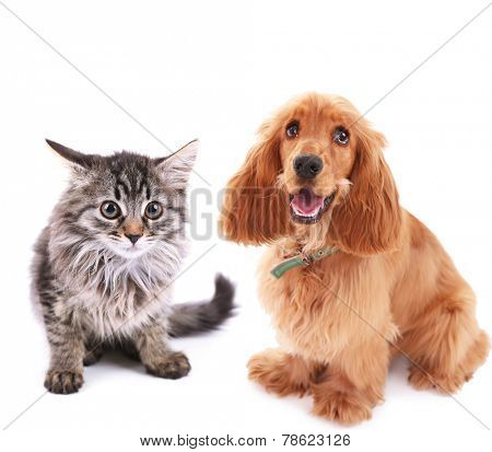 Cute dog and kitten isolated on white