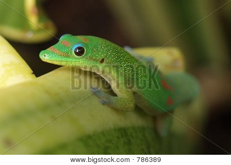 Gecko Stretch