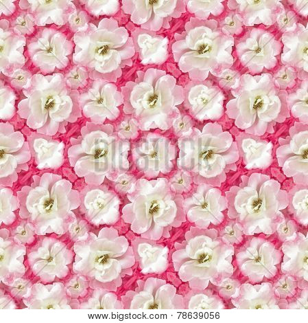 White Roses Floral Pattern