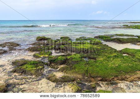 Algae On The Sea, Boavista - Cape Verde