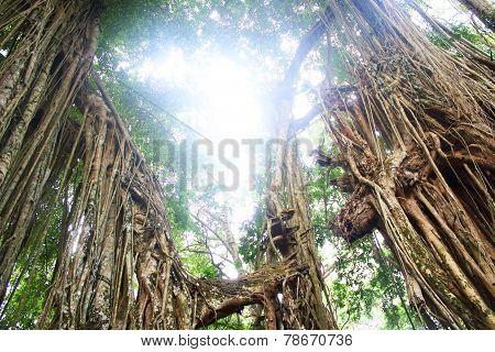 Jungle With Sunshine