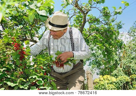 Grandfather In The Garden