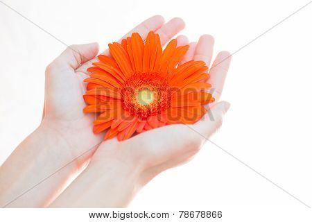 young woman holding flower in her hands