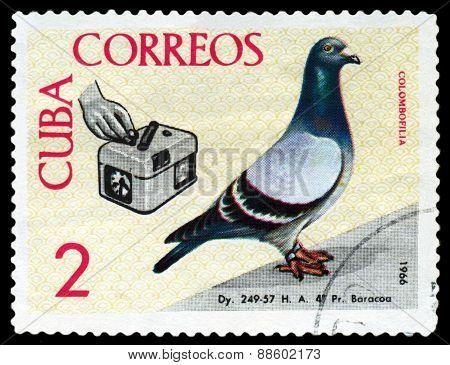 Vintage  Postage Stamp. Birds. Timer.