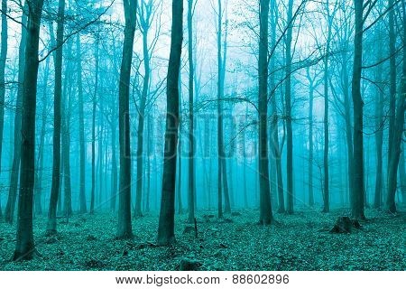 Fantasy Forest In Fog In Green