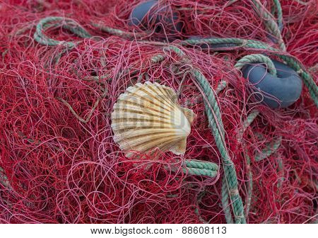 Red Nets With Shell