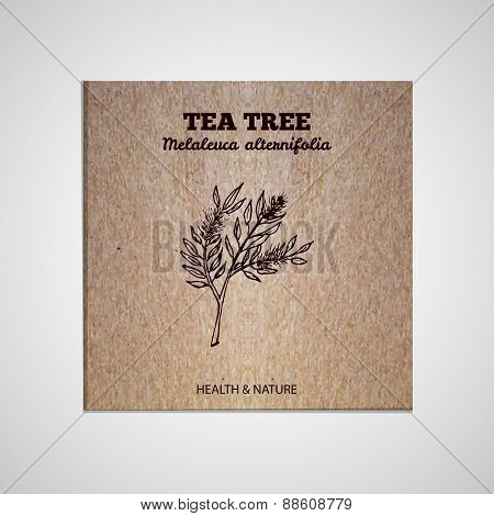 Herbs and Spices Collection - Tea tree