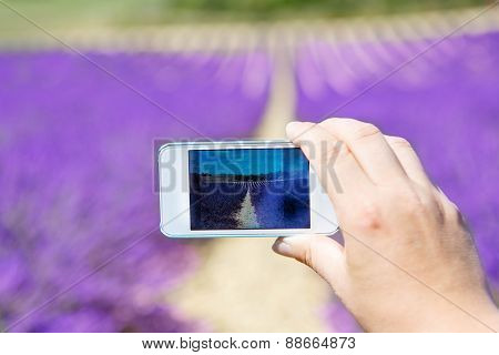 Hand Making Picure With Mobile Phone Of Lavender Field