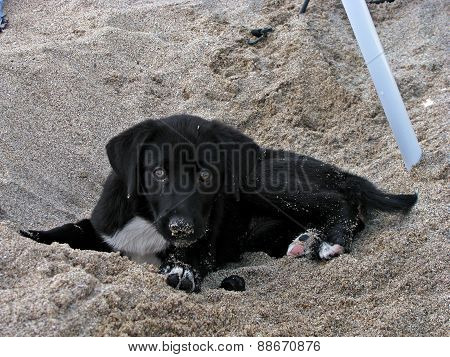 Dog playing in the sand