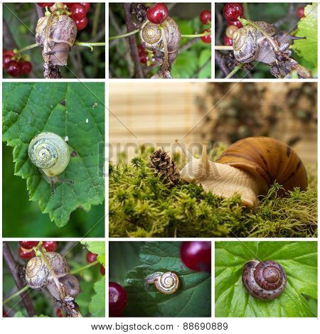 Collage with snails