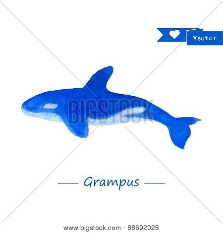 Blue grampus illustration. Handdrawn watercolor whale