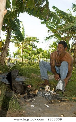 native Nicaraguan man feeding chickens and chicks grated coconut in jungle Corn Island Nicaragua Central America Caribbean sea in background poster